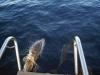 Delphine vor der Sonntag